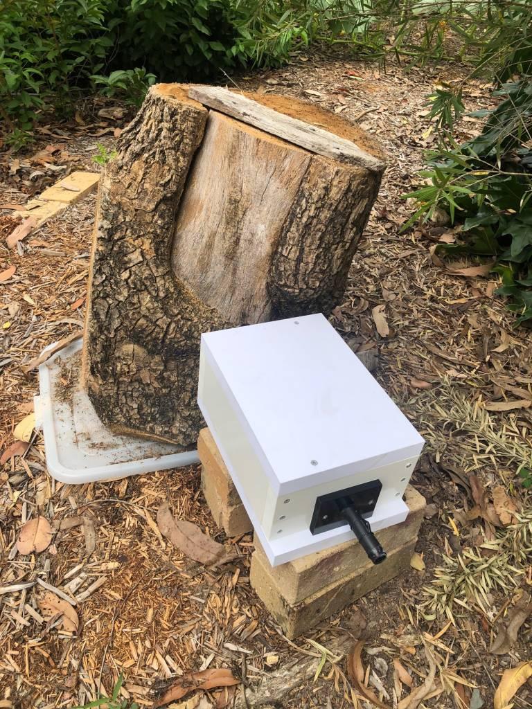 Native Bee Hive Eduction